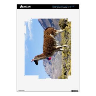 Manada adornada en el Puna, montañas 2 del lama de Pegatina Skin Para iPad 3