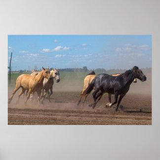Manada corriente del caballo poster