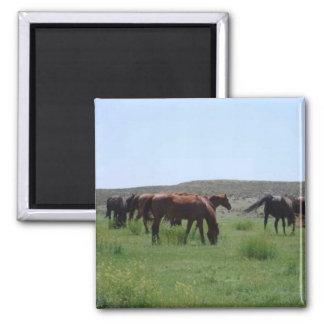 Manada de caballos - el condado de Logan, Kansas Imán Cuadrado