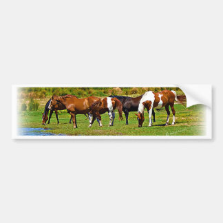 Manada de caballos etiqueta de parachoque