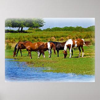 Manada de caballos por The Creek Poster