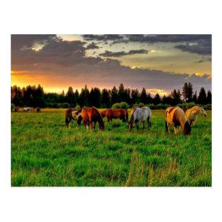 Manada de caballos tarjetas postales