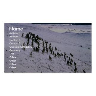 Manada de ciervo mula tarjetas personales