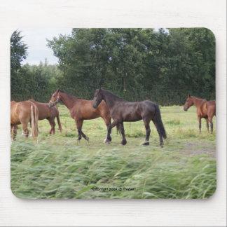 manada de diversos caballos alfombrilla de ratón