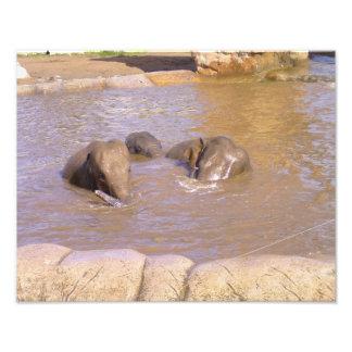 Manada de elefantes fotografía