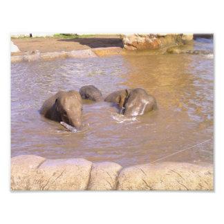 Manada de elefantes cojinete
