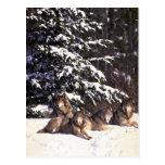 Manada de lobos en el borde de maderas nevosas tarjeta postal
