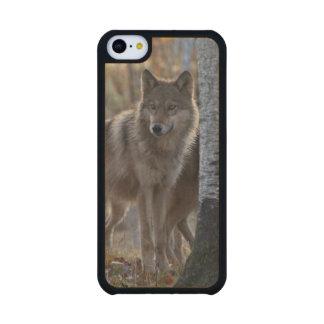 Manada de lobos funda de iPhone 5C slim arce