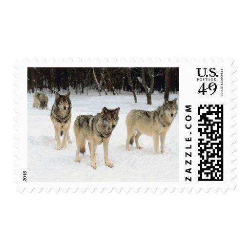 Manada de lobos sellos