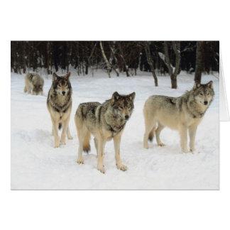Manada de lobos felicitación