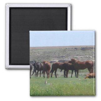 Manada de los caballos y del perro de las praderas imán cuadrado