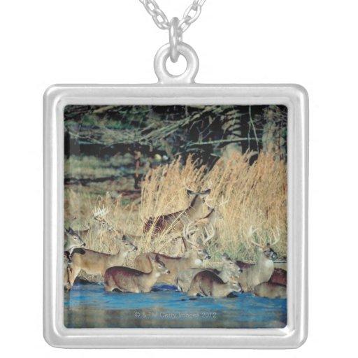 Manada de los ciervos 2 collares