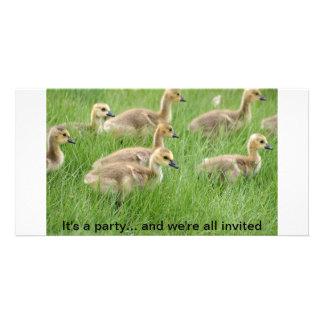 Manada de los gansos o de los ansarones de Canadá  Plantilla Para Tarjeta De Foto