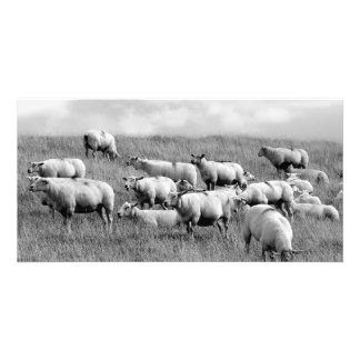 Manada de ovejas tarjetas con fotos personalizadas