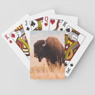 Manada del bisonte americano (bisonte del bisonte) barajas de cartas