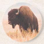 Manada del bisonte americano (bisonte del bisonte) posavasos cerveza
