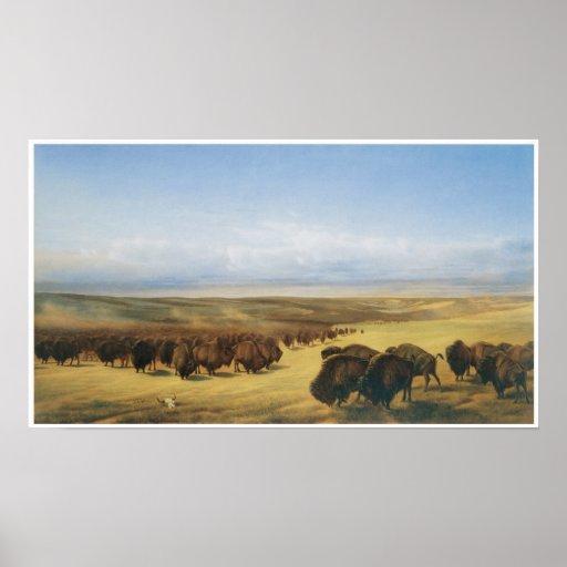 Manada del búfalo del vintage póster