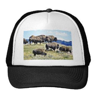 Manada del búfalo - parque nacional de Yellowstone Gorras De Camionero