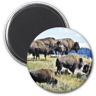 Manada del búfalo - parque nacional de Yellowstone Imán Redondo 5 Cm