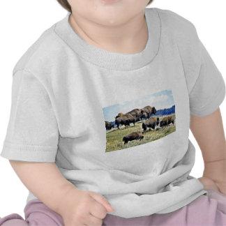 Manada del búfalo - parque nacional de Yellowstone Camisetas