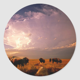 Manada del búfalo pegatina redonda