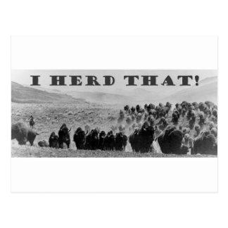 manada del búfalo que playaaa postales