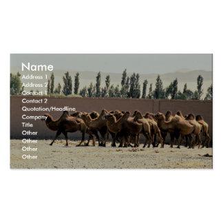 Manada del camello en la ciudad antigua imitada de tarjetas de visita