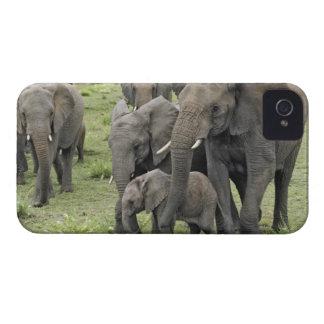 Manada del elefante africano, africana del Loxodon iPhone 4 Case-Mate Fundas