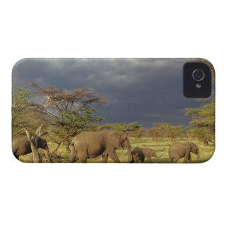 Manada del elefante africano, africana del Loxodon iPhone 4 Protectores