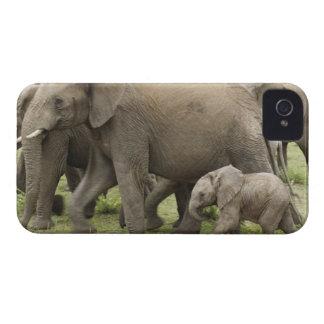 Manada del elefante africano, africana del Loxodon iPhone 4 Protector
