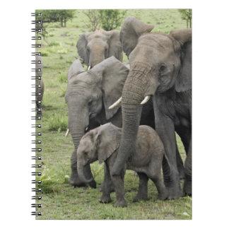 Manada del elefante africano, africana del Loxodon Libros De Apuntes Con Espiral
