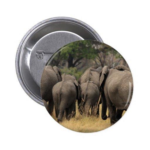 Manada del elefante pins