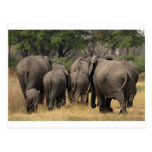 Manada del elefante postal