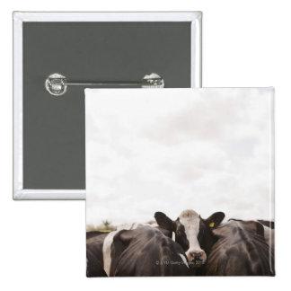 Manada del ganado y del cielo cubierto 2 pin