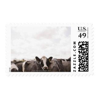 Manada del ganado y del cielo cubierto 2 franqueo