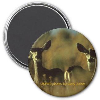 Manada del imán/de ciervo mula imán redondo 7 cm