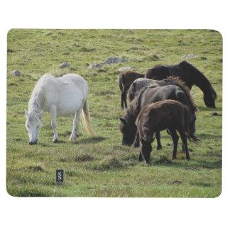 Manada del potro de Dartmoor que pasta verano