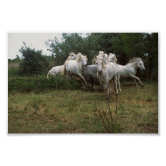 Manada gris corriente del caballo poster