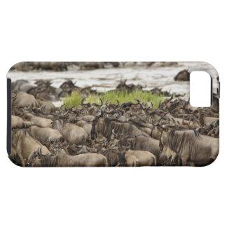 Manada masiva del Wildebeest durante la migración, iPhone 5 Case-Mate Carcasa