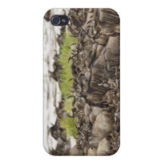 Manada masiva del Wildebeest durante la migración, iPhone 4 Carcasa
