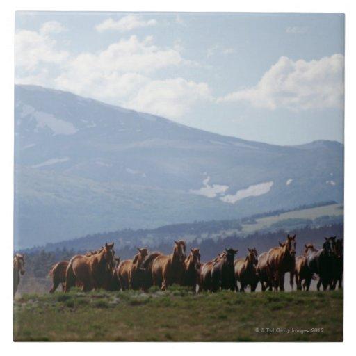 Manada móvil del vaquero de caballos azulejos ceramicos
