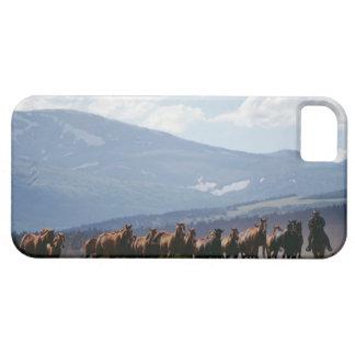 Manada móvil del vaquero de caballos iPhone 5 carcasas