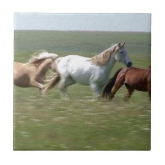 Manada que vaga de los caballos americanos del azulejo cuadrado pequeño