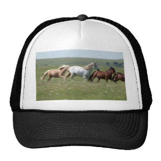 Manada que vaga de los caballos americanos del gorros