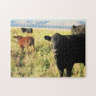 Manada roja y negra del becerro de la vaca - becer puzzle