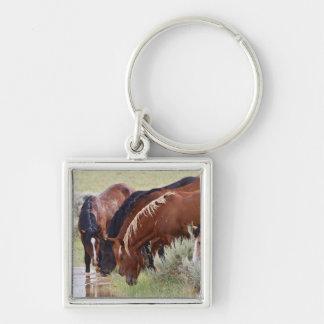 Manada salvaje del caballus del Equus del caballo) Llavero
