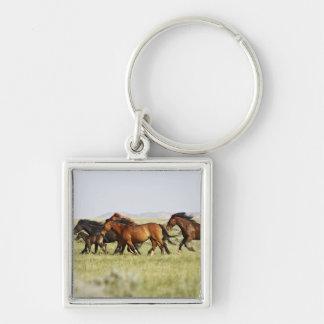Manada salvaje del caballus del Equus del caballo) Llaveros