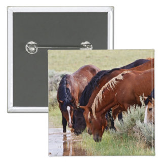 Manada salvaje del caballus del Equus del caballo) Pin Cuadrada 5 Cm