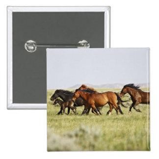 Manada salvaje del caballus del Equus del caballo) Pins