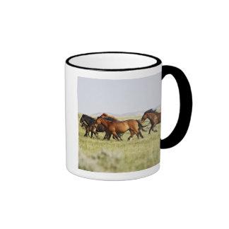 Manada salvaje del caballus del Equus del caballo) Tazas